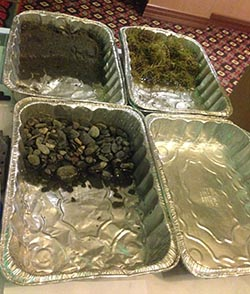 """Oil spill activity: The four aluminum roasting pans each contain a mock """"beach"""" – one mudflat, one grassy, one rocky, one pebbly. The students, working in teams, plan how they will respond to the vegetable oil and black tempura paint oil spill that is about to hit. Cost sheets describe how much their labor and available oil spill response materials – such as pipe cleaners, cotton balls, sponges, and oil absorbent pads – will cost and what is their budget for the clean-up. Once they signal they are ready, a teaspoon of the oil mixture is spilled into their pan, and they race to respond. In a short and exciting hour, these students understand more about oil spill response, and the importance of oil spill prevention, than most adults."""
