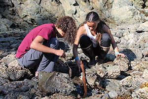 Students look for lingering Exxon Valdez oil during in 2016. Photo courtesy of Alaska Geographic.
